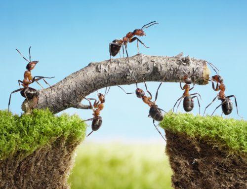 Tips voor duurzame (politieke) coalitie